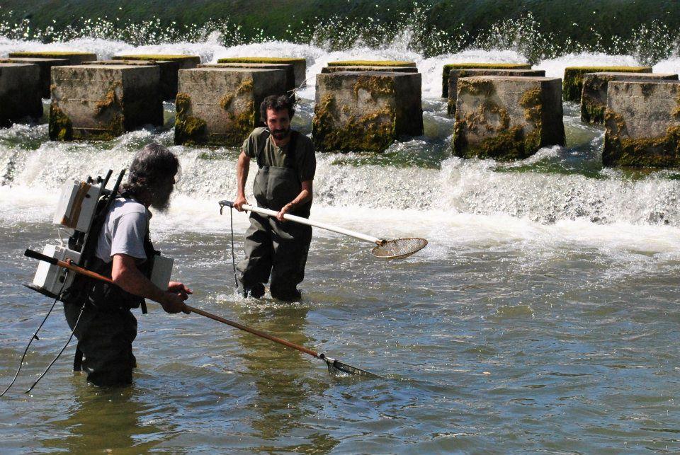 ittiopesca, monitoraggio ittiofauna, bovero, pesci, fiumi, po, trota faria, temolo, scazzone, siluro