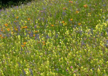 21-22 aprile: Weekend botanico in Valle Grana (CN)