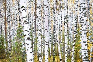 Ecologia degli habitat forestali (Val Varaita – CN)