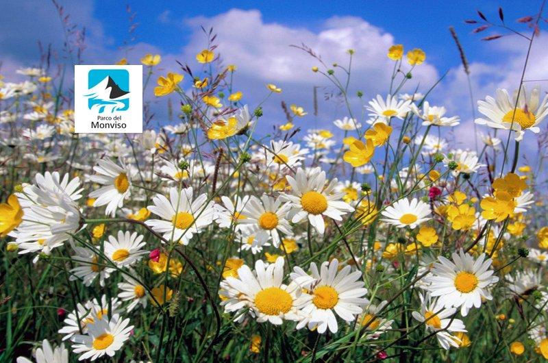 Quel mazzolin di fiori: corso sui fiori più belli del Parco del Monviso