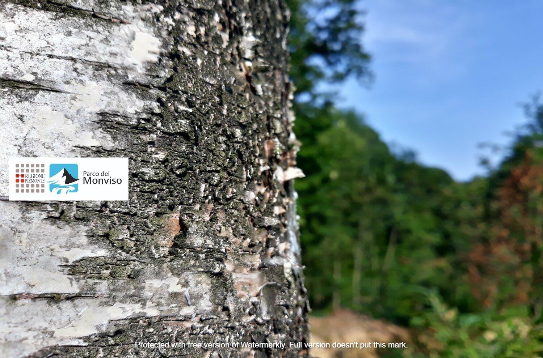 """""""Ci vuole un albero"""": corso sugli alberi e arbusti del Parco del Monviso"""
