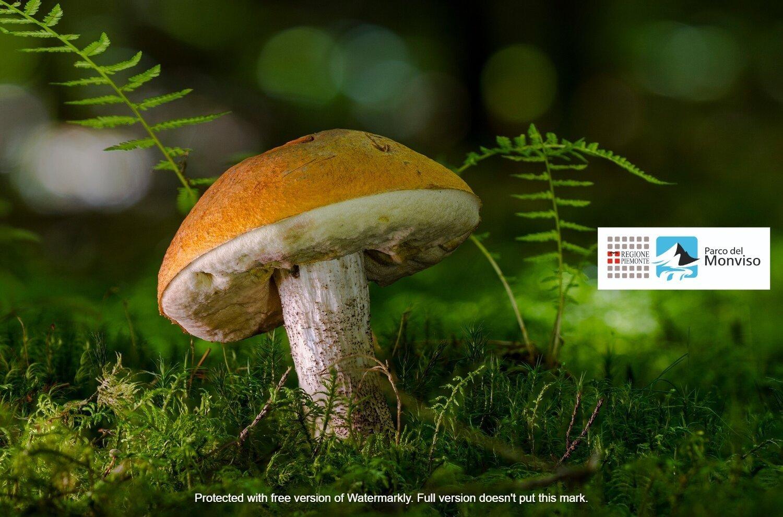 Bulè: conosciamoli un po' ! Corso sui funghi commestibili e non